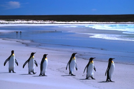 Falklands Islands: brief to communicate richness of natural environment