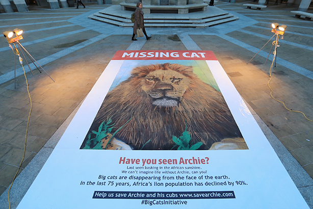 Watch  National Geographic rolls out  missing (big) cat  poster with a  difference cca614154