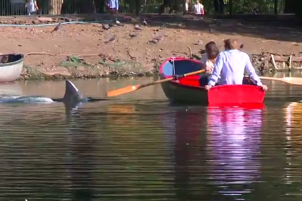 Jaws dropped: A shark fin appears in Finsbury Park lake