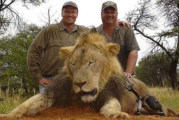Condemned: Walter Palmer (left) poses with a lion he killed on a previous hunting trip (Credit: Rex Shutterstock)
