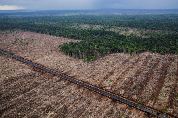 Picture of deforestation in Indonesia. Credit: Ulet Ifansasti / Greenpeace