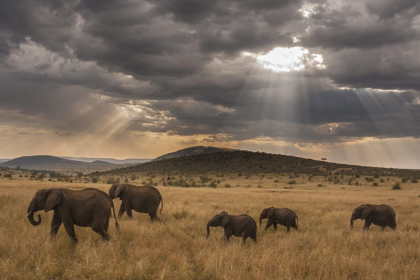 Kenya: Well known for its wildlife (Credit: Thinkstock)
