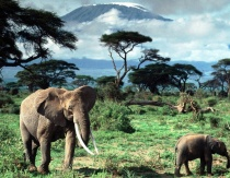 Kenya sticks with Myriad, VoX for tourism PR | PR Week