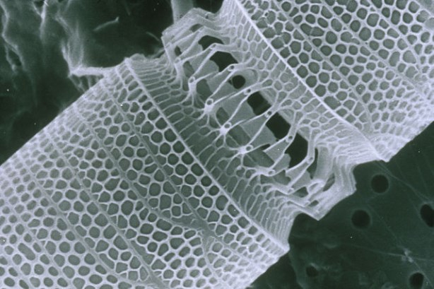 Nanotubing image via CSIRO / Wikimedia Commons; Used under the Creative Commons Attribution 3.0 Unported license.