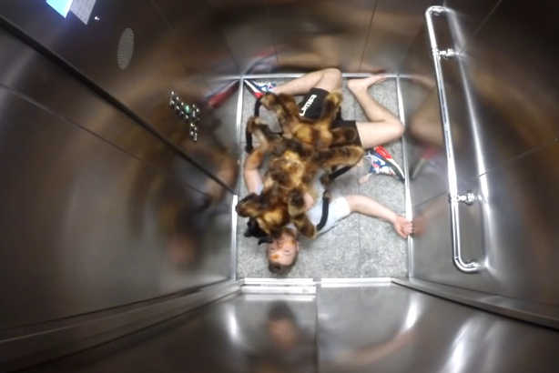 The Mutant Giant Spider Dog video attracted 114 million views on YouTube.