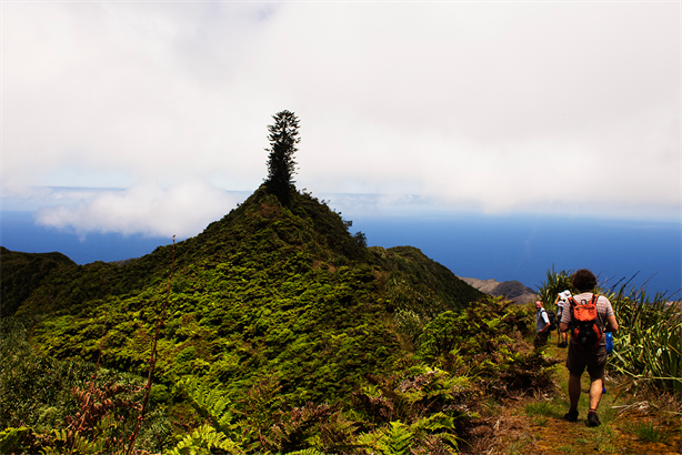 A walk to Diana's Peak, designed by the St Helena Nature Conservation Group