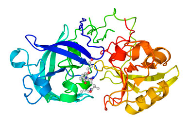 Renin complexed with an inhibitor. | SCIENCE PHOTO LIBRARY