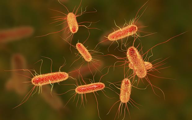 <i>Escherichia coli </i>is the most common uropathogen in community dwelling people older than 65 years. | KATERYNA KON/SCIENCE PHOTO LIBRARY