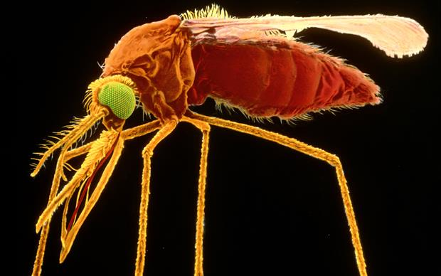 Malaria prophylaxis recommendations are summarised in the intelog travel tables online. | DR TONY BRAIN/SCIENCE PHOTO LIBRARY