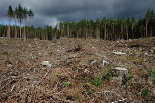 Nature: Luopioinen, Pälkäne, Finland, 2017 (Image: Tero Laaks / Flickr)