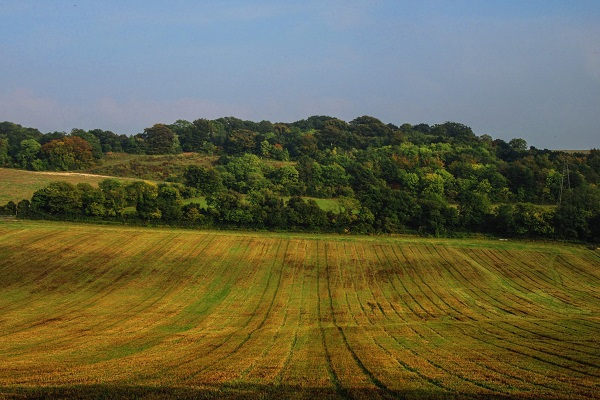 Agriculture: Fields in Kent (JR)