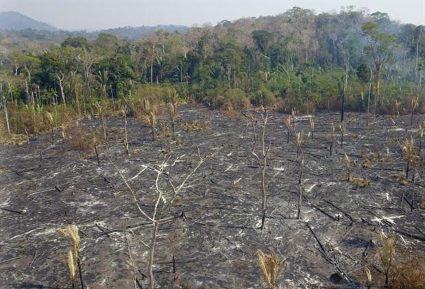 Nature: Amazon fires 2 2019 Porto Velho (Image: Michael Dantas / WWF Brasil)