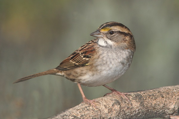 Biodiversity - sparrow bird