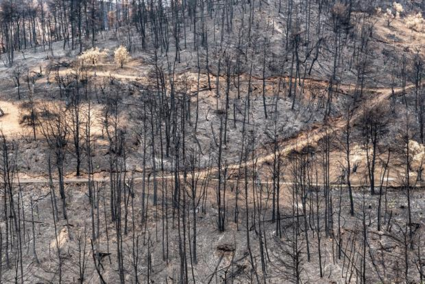 Forest on the Greek island of Evia, following wildfires this summer. While a study says Europe is more resilient to climate change, it is still experiencing devastating consequences. Photo: Dominika Zarzycka/NurPhoto via Getty Images