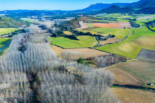 A poplar grove in Navarre, Spain. Short-rotation coppicing counts as one source of advanced biofuels. Photo: Mikel Bilbao/VWPics/Universal Images Group via Getty Images