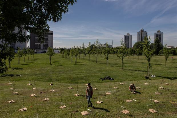 Tree planting as part of the Forestami project in Milan, Italy. The leaked draft strategy suggests active tree planting should be reserved largely for urban and agricultural areas. Photo: Emanuele Cremaschi/Getty Images