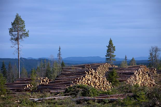 """Deforestion in Sweden. A leaked commission document suggests """"possible national caps on the use of stem wood above a certain size for energy"""". Photo: Arterra/Universal Images Group via Getty Images"""