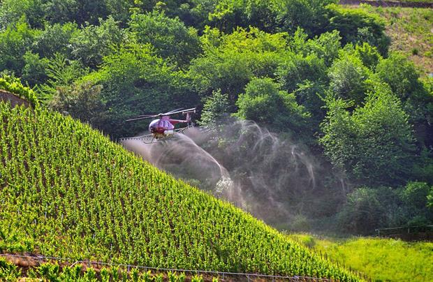 A helicopter sprays pesticides over a vineyard on the banks of the Mosel, Germany. Photo: JOKER / Walter G. Allgöwer/ullstein bild via Getty Images