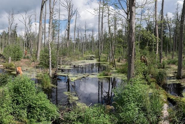 Nature - Bialowieza Forest 2