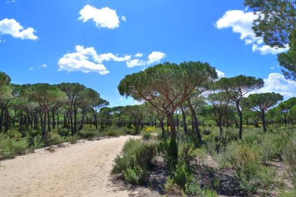 Nature - Doñana national park, Spain