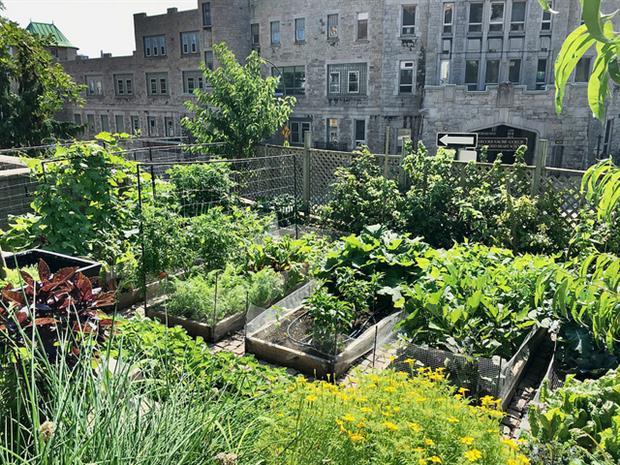 Agriculture - Urban garden (Sandra Cohen-Rose/Colin Rose)