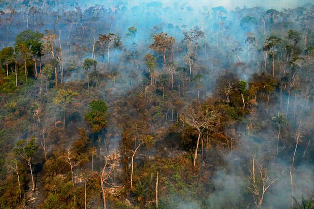 Amazon destruction: has broken through into mainstream political discourse (Photo by FLORIAN PLAUCHEUR/AFP via Getty Images)