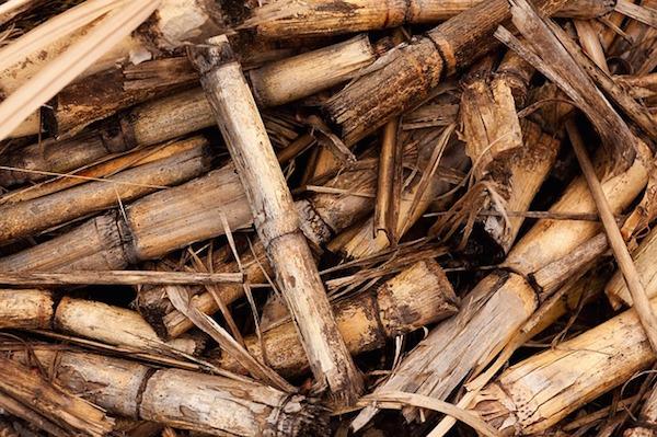 Energy - biomass (Pixabay)