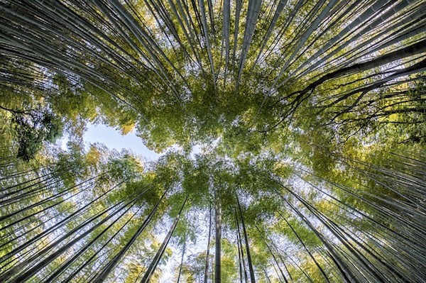 Nature - bamboo forest (Pixabay)