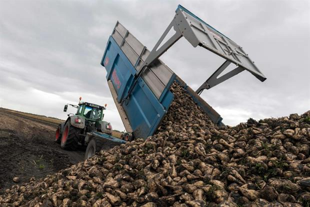 A farmer offloads sugar beet harvest in the Auvergne region, November 2019. Farmers warn that their crop is threatened by a virus carried by aphids. Photo by Thierry Zoccolan / AFP / Getty Images
