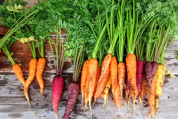 Agriculture - organic crop carrots (Pixabay)