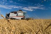 Farming, cereals