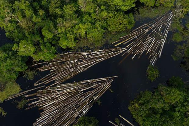 Aerial view of about 900 logs of wood seized by the Amazon Military Police that had been cut from the Amazon rainforest by illegal loggers (Photo by RICARDO OLIVEIRA/AFP via Getty Images)