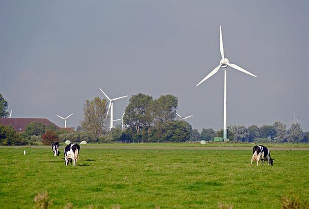 Renewables - German wind farm on field with cows (Pixabay)