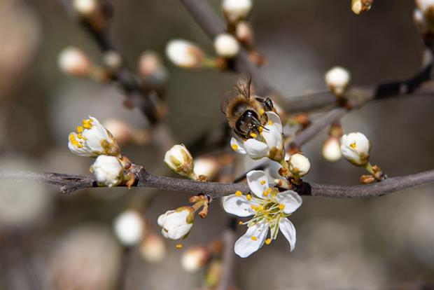 The commission placed restrictions on neonicotinoids in 2013, with a near total ban coming into force in 2018 (Photo by Nicolas Economou/NurPhoto via Getty Images)