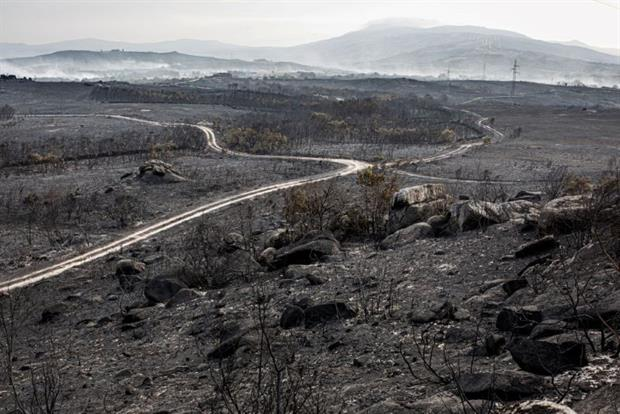 The aftermath of a fire in Cualedro, Spain, in September: Europe's habitats are facing unprecedented destruction, in part due to climate change, the EEA has warned. Photo: Brais Seara Fernandez/Getty