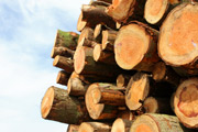 Wood, logging