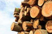 Wood, logging