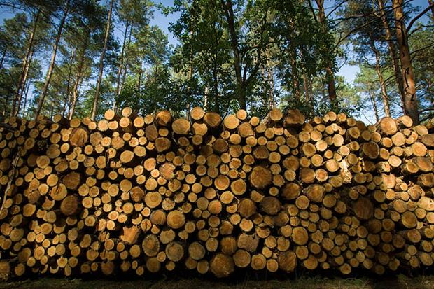 Assessment: the study identifies an upward trend in the use of woody biomass in the past 20 years (Photo by Jaap Arriens/NurPhoto via Getty Images)