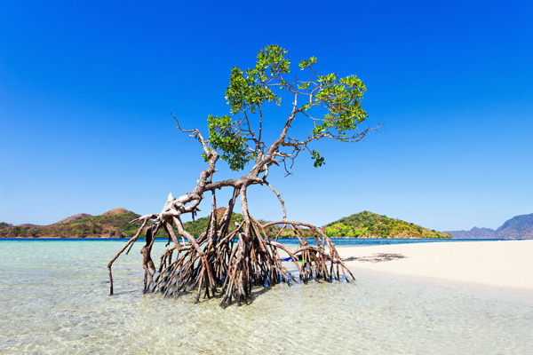 Climate / Nature: Single mangrove on tropical island beach (photograph: Andrey Khrobostov/123RF)