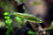 Nature, stone moroko fish (credit: wrangler/123RF)