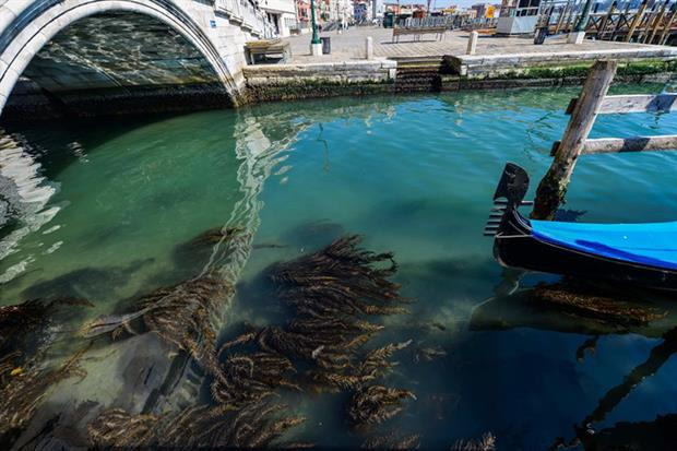 A view shows seaweed in clear waters in Venice on 18 March as a result of the stoppage of motorboat traffic, following the country's lockdown within the new coronavirus crisis (Photo by ANDREA PATTARO/AFP via Getty Images)