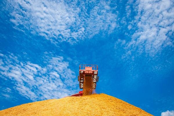 Drax's biomass