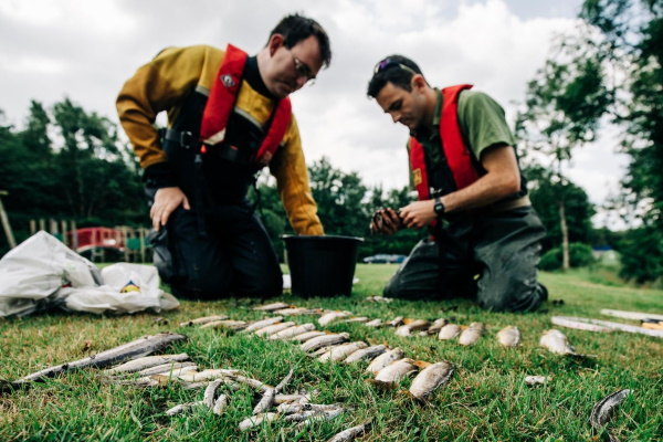 The digestate spill killed a huge number of fish. Photograph: Environment Agency