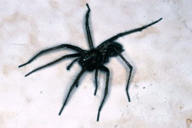 Aracnophobia is the fear of spiders