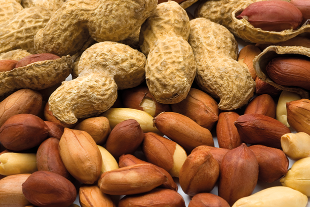 Early introduction of allergenic foods, such as peanuts, may be appropriate for some infants