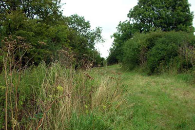 Wildlife corridor in English wheatfields (credit: Will Lovell / Creative Commons Licence)
