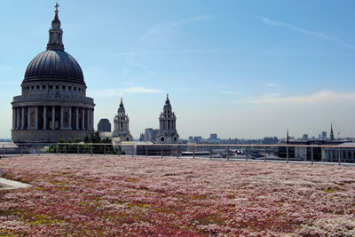 London's new office development at 150 Cheapside has a green roof made of the creeping succulent sedum