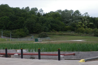 Reed beds at Somerton sewage works being used to remove phosphorus. Credit: Wessex Water