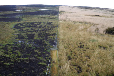 The impact of peat restoration work clearly shown in a photo of Langden Head, Forest of Bowland. The restored peat is on the right. Courtesy of United Utilities
