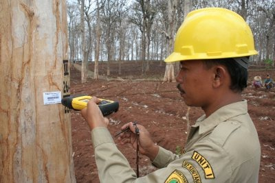 A logging inspector in Indonesia